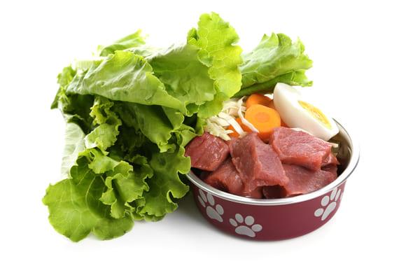 Welches Futter ist für die Welpenernährung das richtige_ Bild.